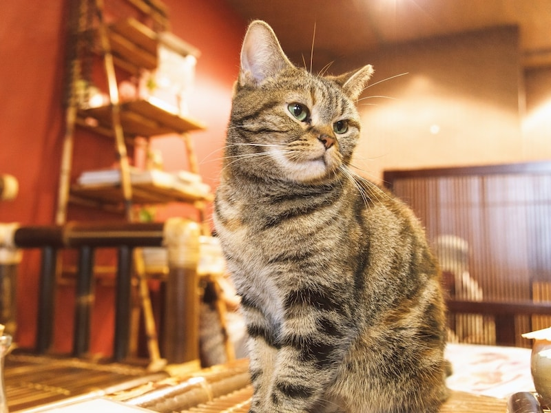 2/22にゃんにゃんにゃんの猫の日!都内にある癒しの猫カフェ7選
