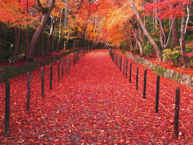 感動必至!この秋行きたい京都の紅葉おすすめスポット20選