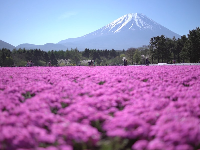 「一面の花畑」が見られる!GWに見頃の全国フラワースポット6選