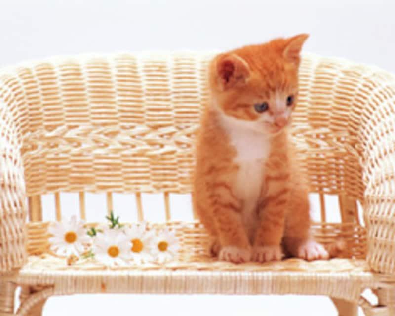 一匹のネコ