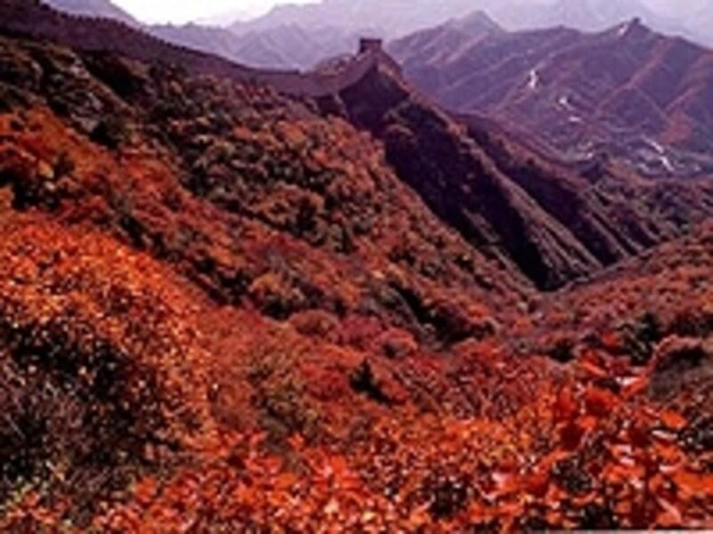 八達嶺長城の紅葉。一般的に中国のベストシーズンは秋