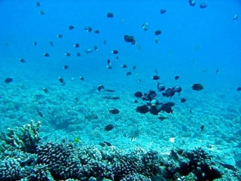 マウイ島ワイレア沖に浮かぶモロキニ島周辺は、ハワイの海洋保護区に指定。たくさんのカラフルな魚たちが迎えてくれる