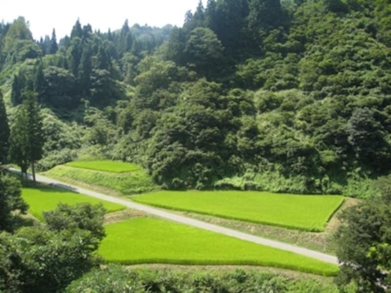 水田とそのそばにある里山と共に、農村社会が育まれてきました。その里山を再生させることは農村の復興にもつながります