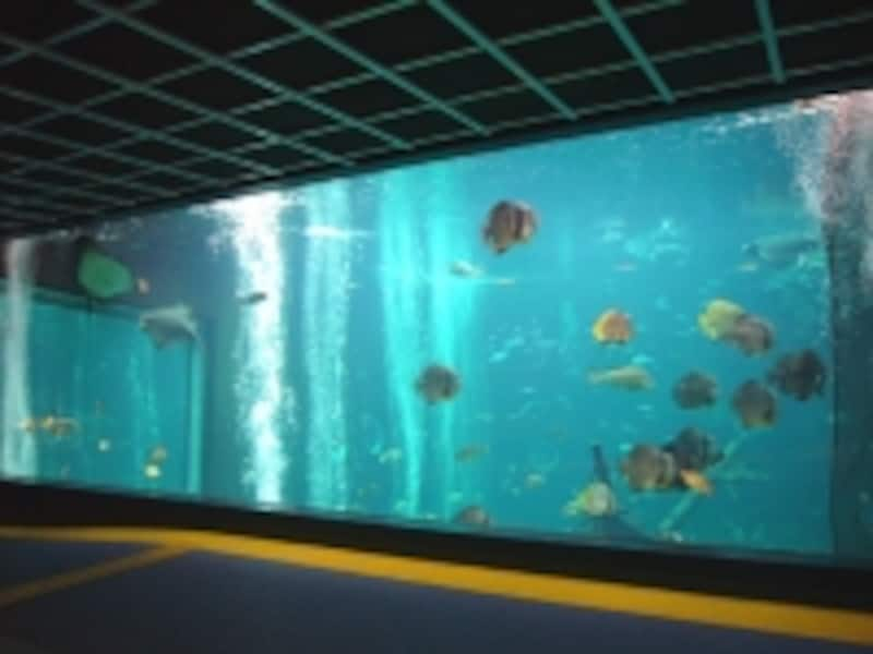水槽の中にはカラフルな魚がスイスイ泳ぎます