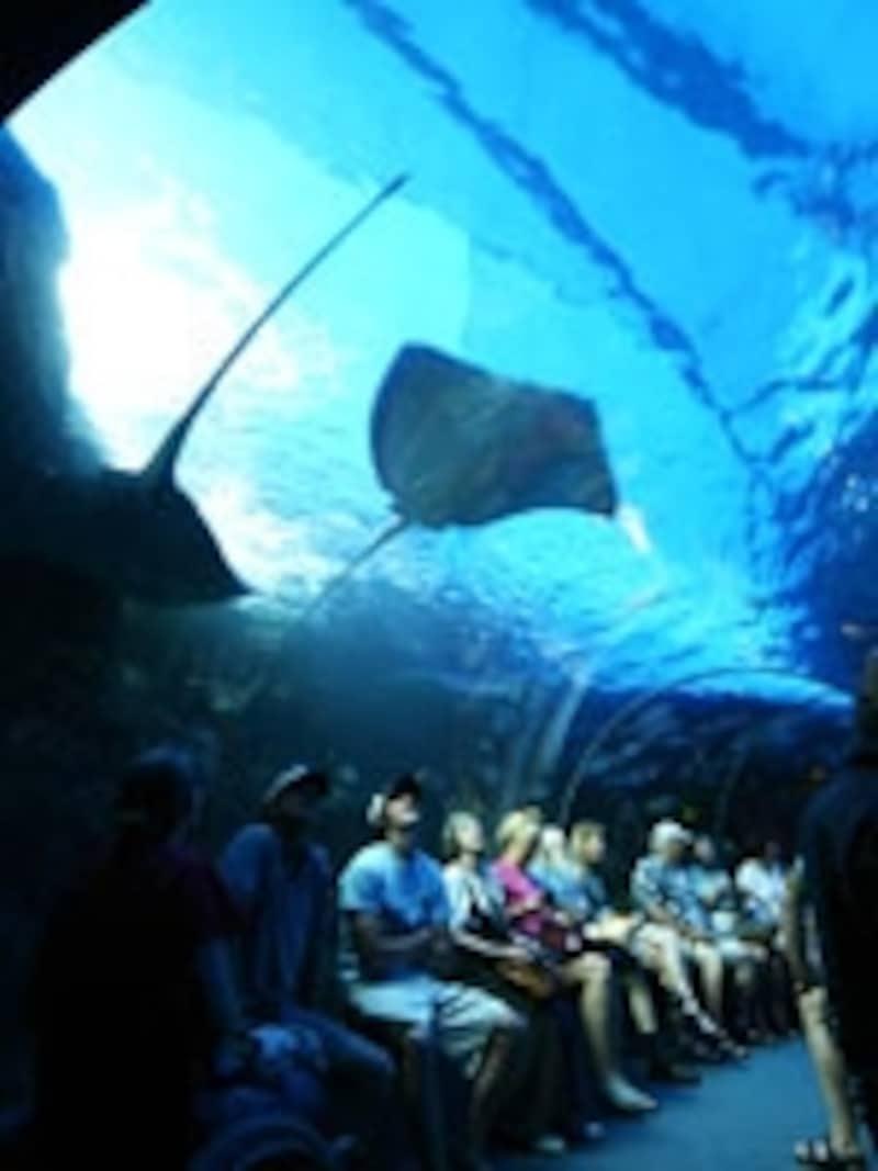 水槽トンネルが人気のマウイ・オーシャン・センター(画像協力:ハワイ州観光局)