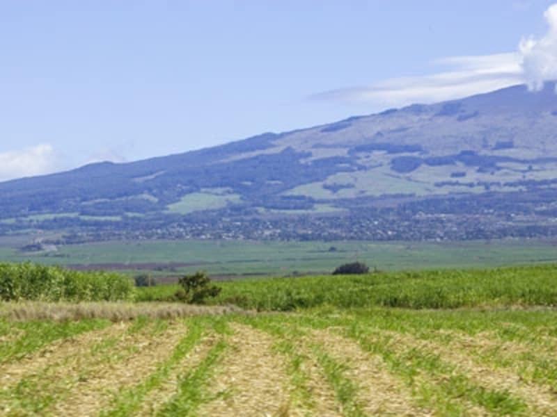 農地が広がるハレアカラの裾野。高原の風が吹く