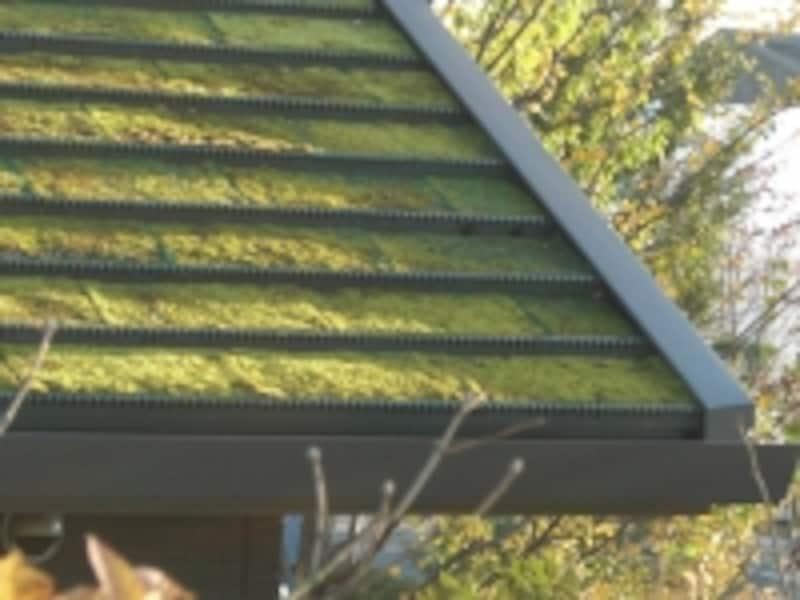 屋根緑化や屋上緑化の技術も進化している。写真は芝が張られた屋根緑化の事例(積水ハウスのゼロエミッションハウス)