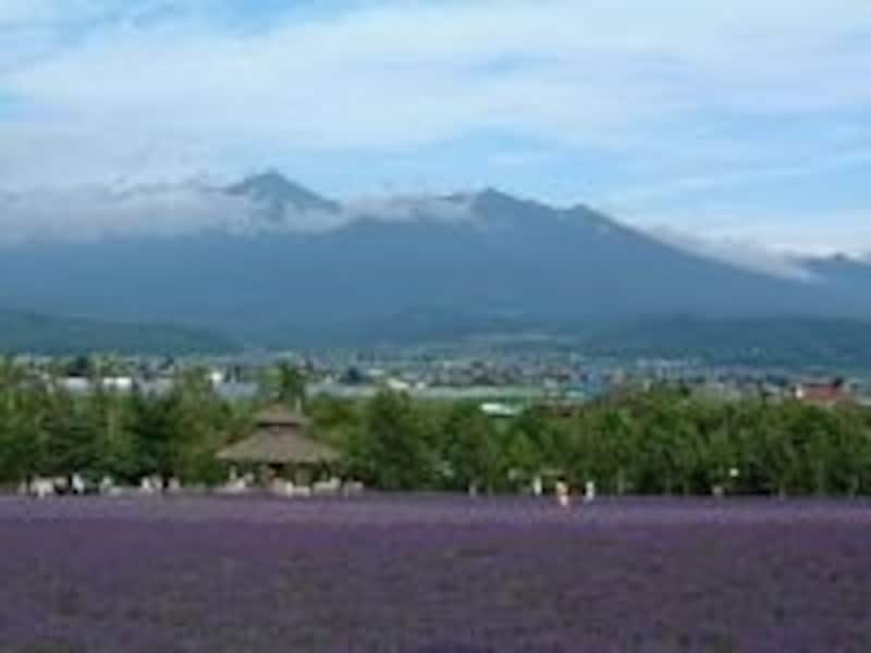 ファーム富田(2)/ラベンダー畑と十勝岳連峰