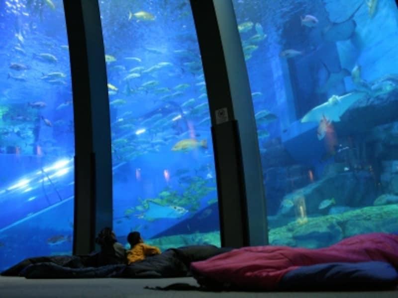 大きな水槽の前で、魚に囲まれながら「おやすみなさい!」(画像提供:横浜・八景島シーパラダイス)
