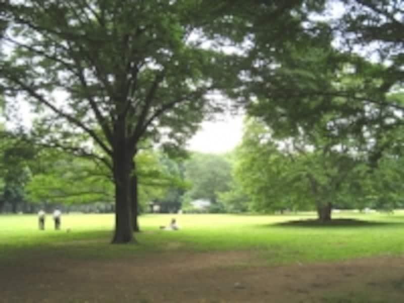 公園の中には川も流れているほどの広さ。巨木が多く、とても都内の光景とは思えない