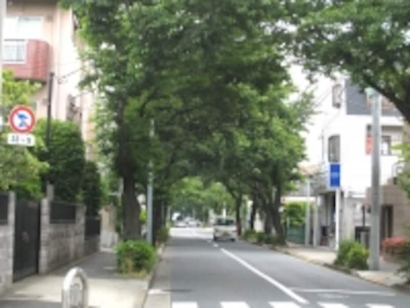 農地の多かった世田谷区には曲がりくねって方角が分かりにくい道が多いが、この辺りは逆にまっすぐな道ばかり。並木のある道も