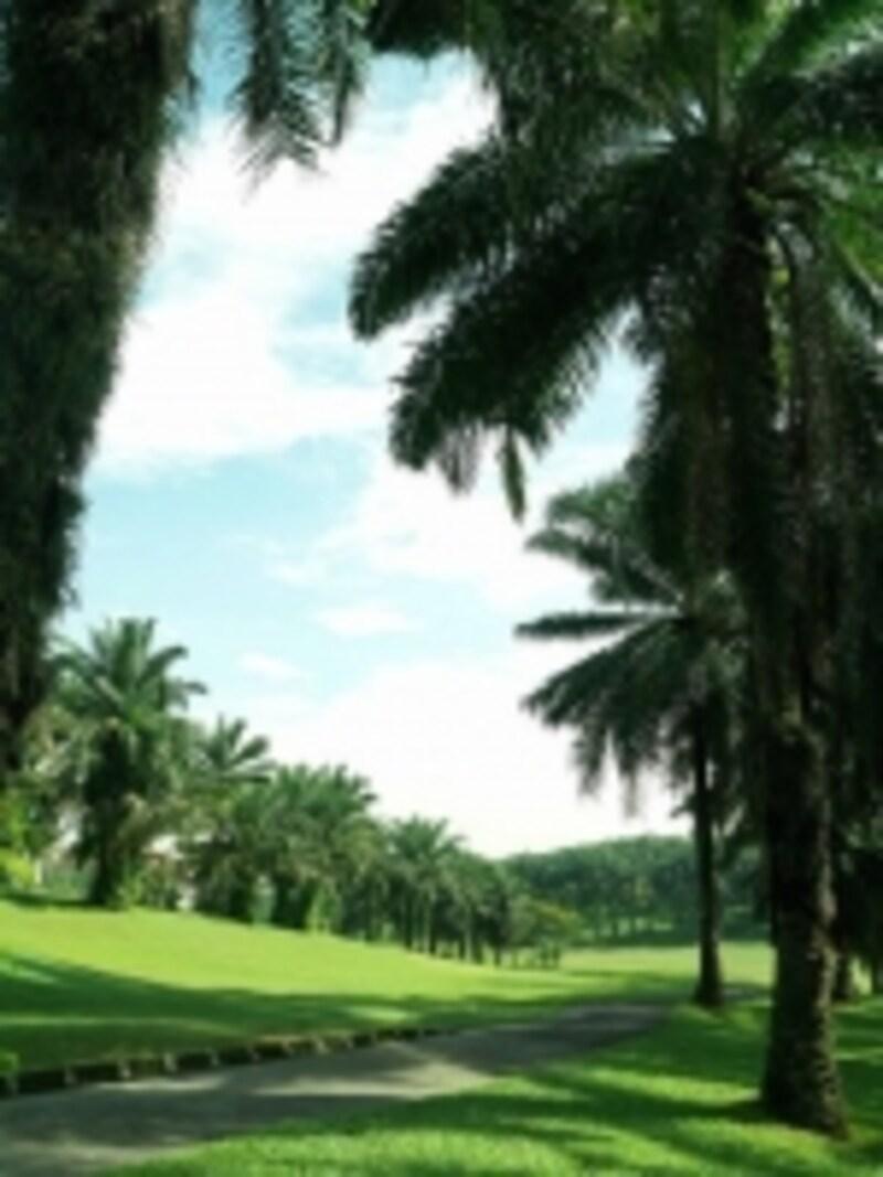 パームツリーに囲まれたゴルフ場は、南国ならではのムード!