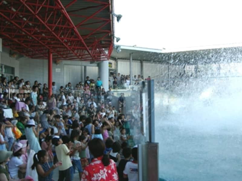 大量の水がかかる「ドルフィンスプラッシュタイム」