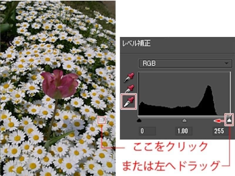 「白色点の設定」で白い花びらをクリック