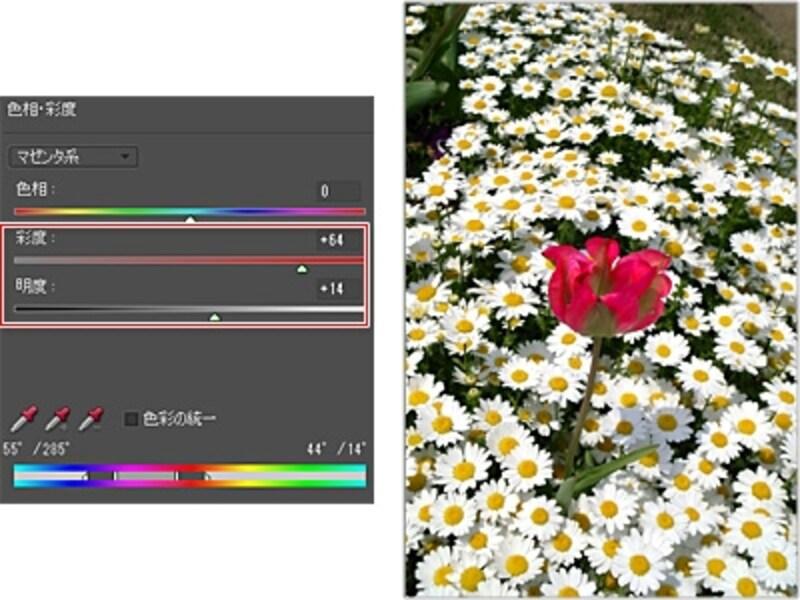 「彩度」と「明度」の数値を高めて赤い花がより明るく鮮やかになった