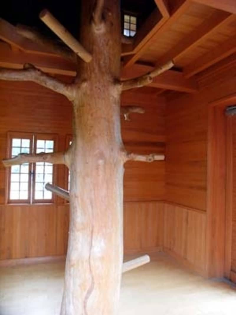 トンガリ帽子がついた隠れ小屋の樹の梯子(はしご)