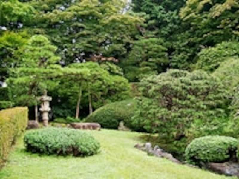 日本庭園では常緑樹が多く植栽されている