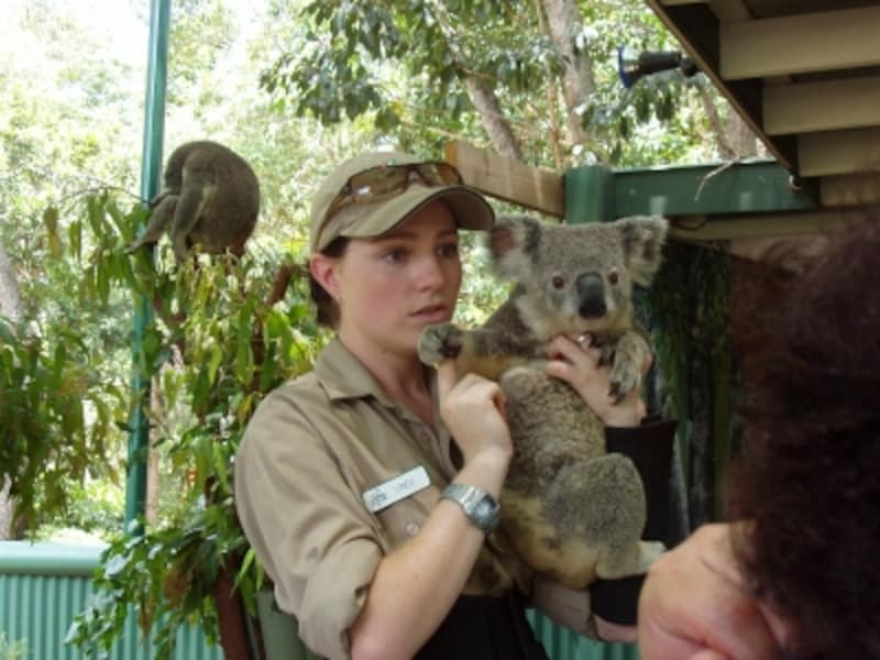 キュートなコアラなどの動物と触れ合えるワイルドライフパーク