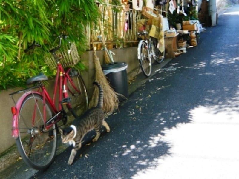 谷根千は猫好きにはたまらないエリアでもあります