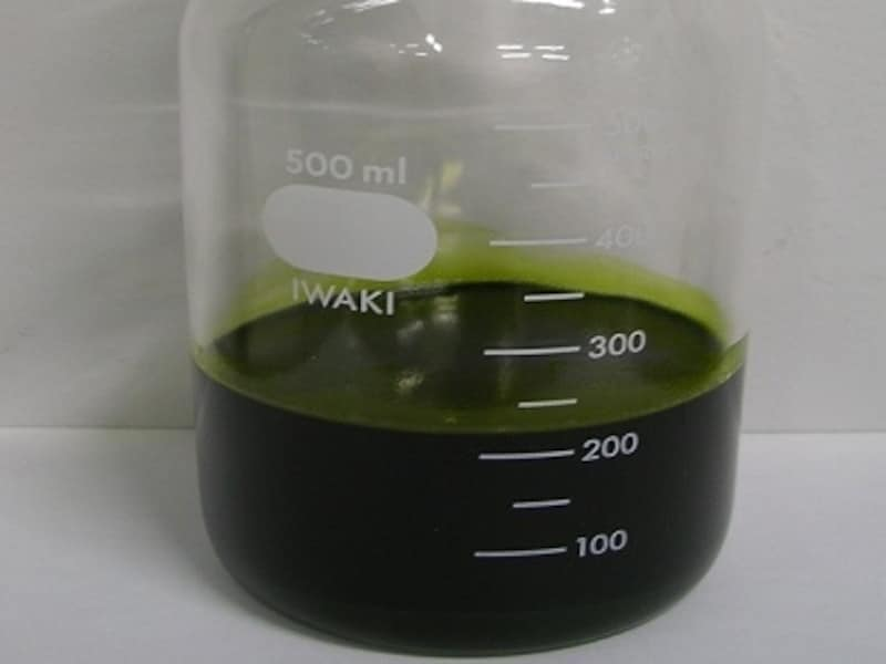 精製前のユーグレナオイル