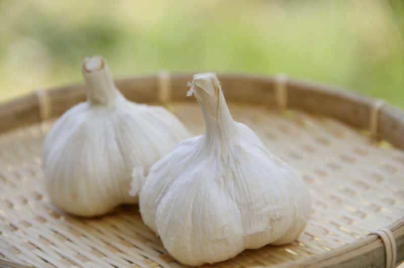 ニンニクの栽培方法・育て方 収穫時期や手入れのコツ