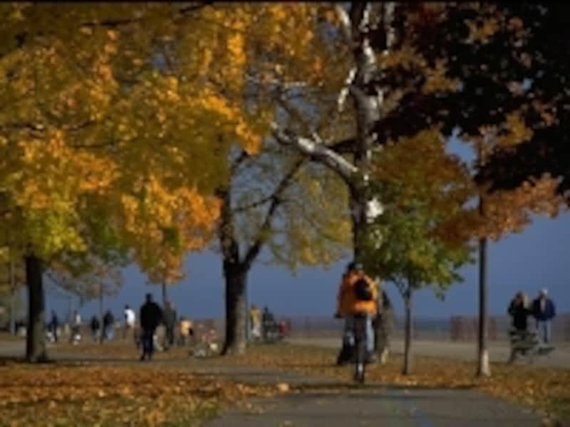 木々が色づくのは10月に入ってからundefined(C)TourismOntario
