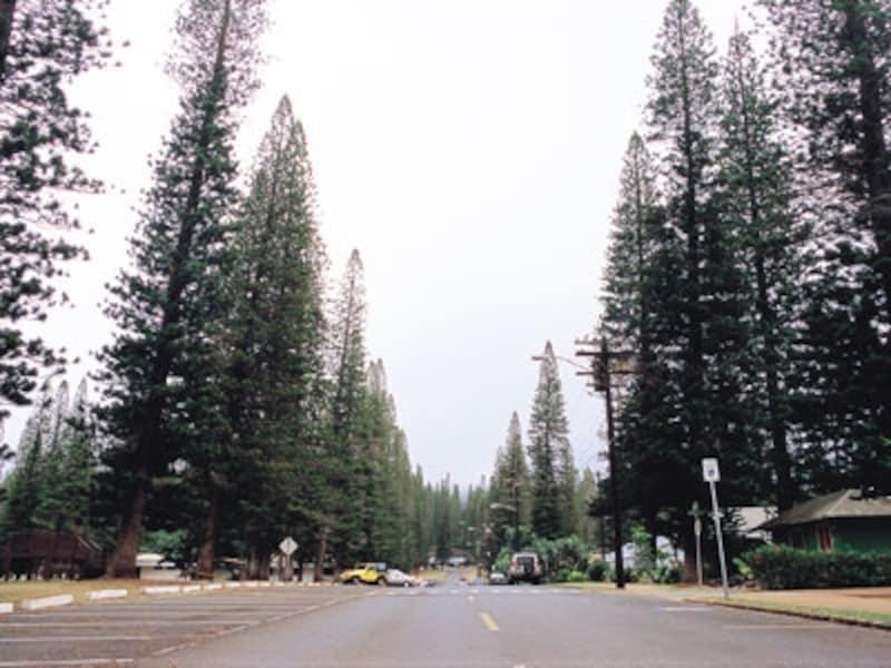 ノーフォーク松の並木が印象的なラナイシティ。もともとはパイナップル農園の労働者のために造られた町(画像協力:ハワイ州観光局)