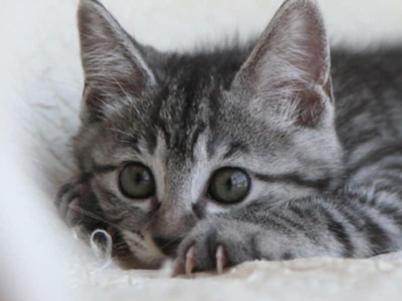 興味を惹くものをみつけた猫は、爪を立てて飛びかかる準備をします