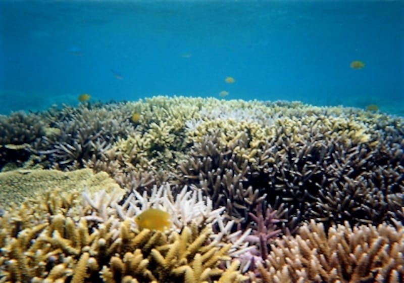 世界に誇る沖縄の海。その美しさは訪れる者の心を魅了します