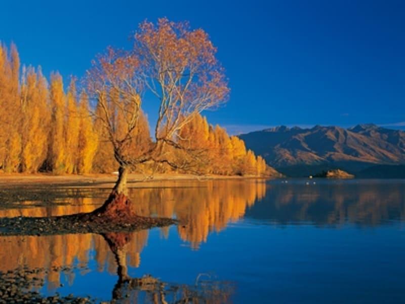 四季が美しいニュージーランドの風景。秋の紅葉は写真にぜひ収めたい©ニュージーランド政府観光局