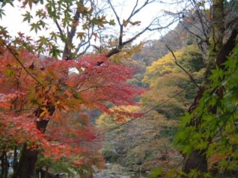袋田の滝周辺の紅葉(2)