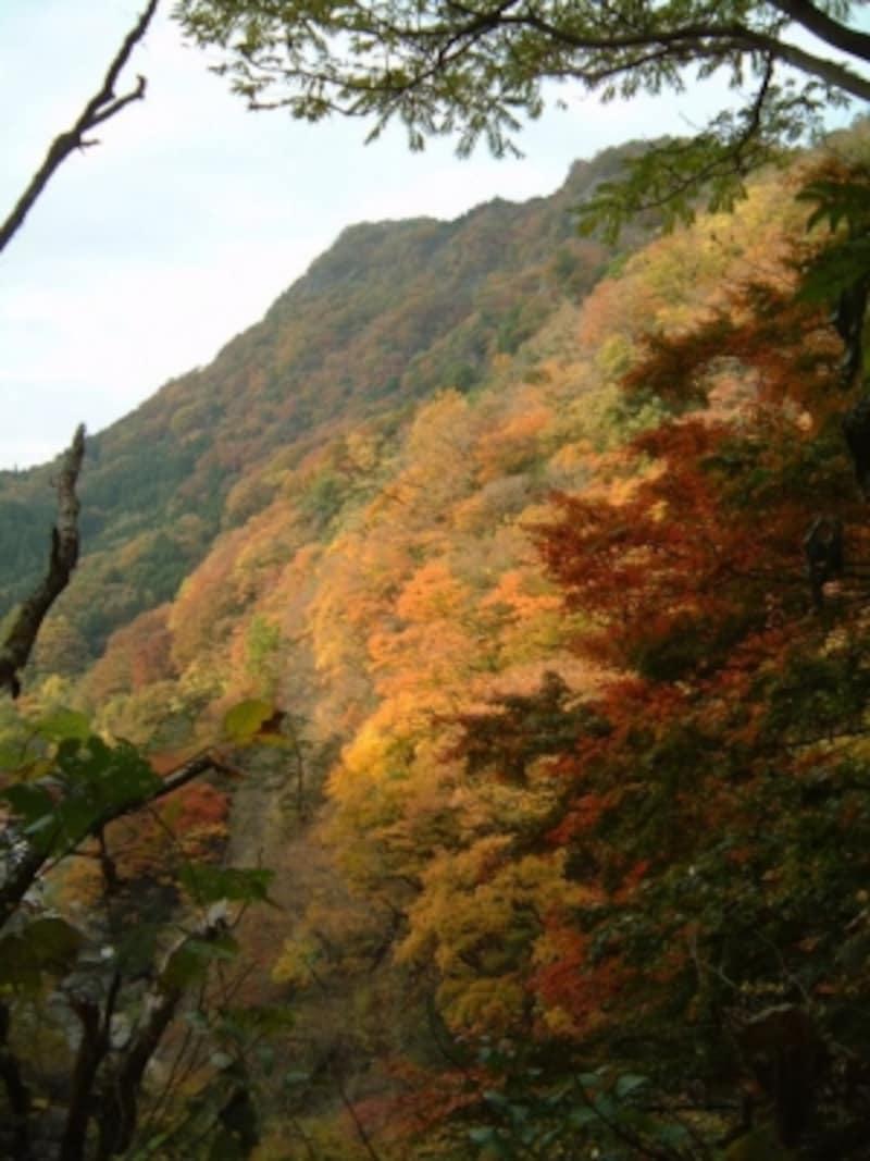 袋田の滝周辺の紅葉(4)/月折山ハイキングコース