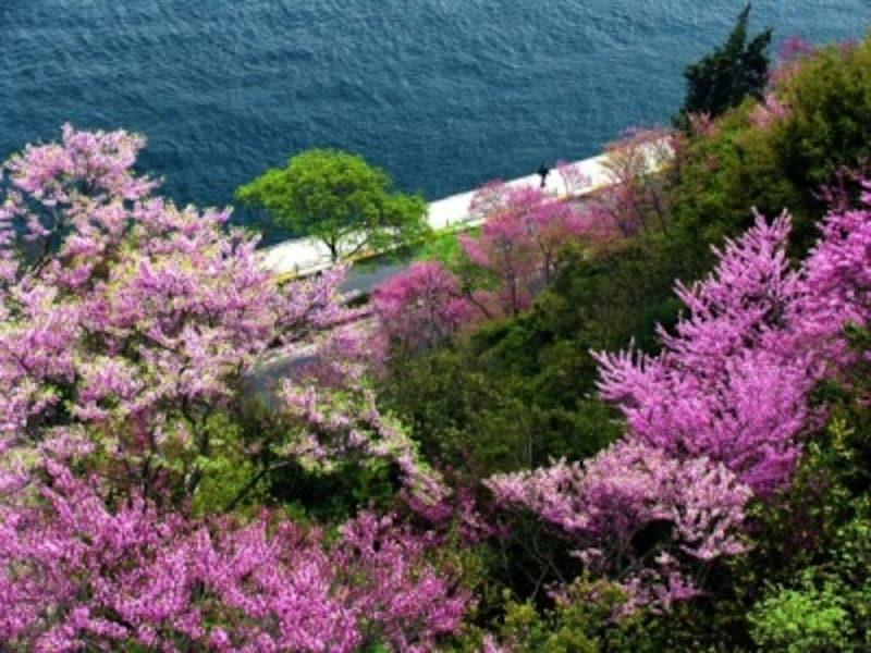 ルメリヒサールから望む春のボスポラス海峡(イスタンブール)