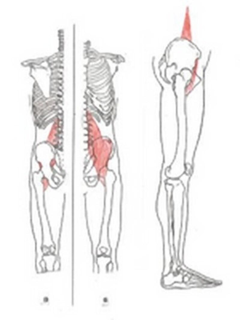 腿上げで主に使うのは腸腰筋です。この筋肉は腰痛の原因にもなるため、強いだけでなく、柔軟性も必用です。