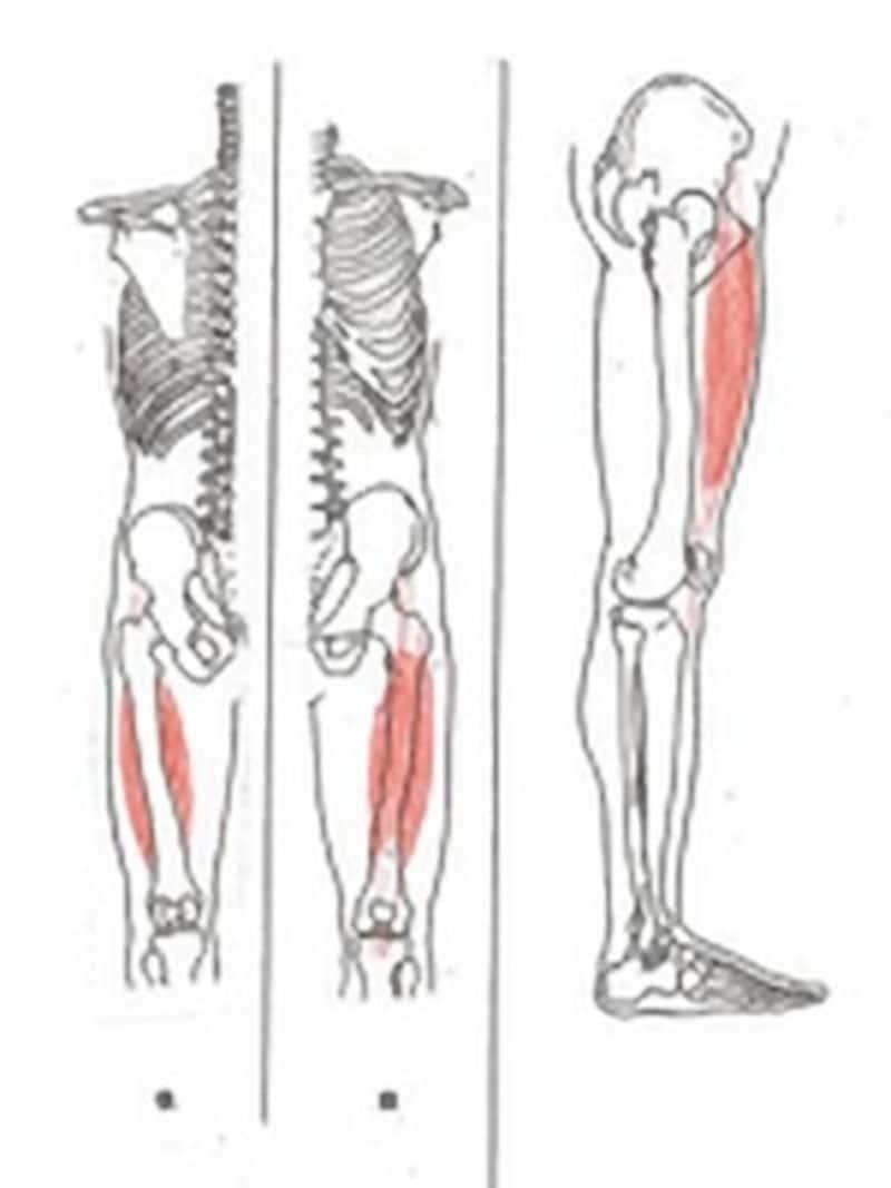 大腿四頭筋は着地時に膝が過度に曲がらないように働きます。