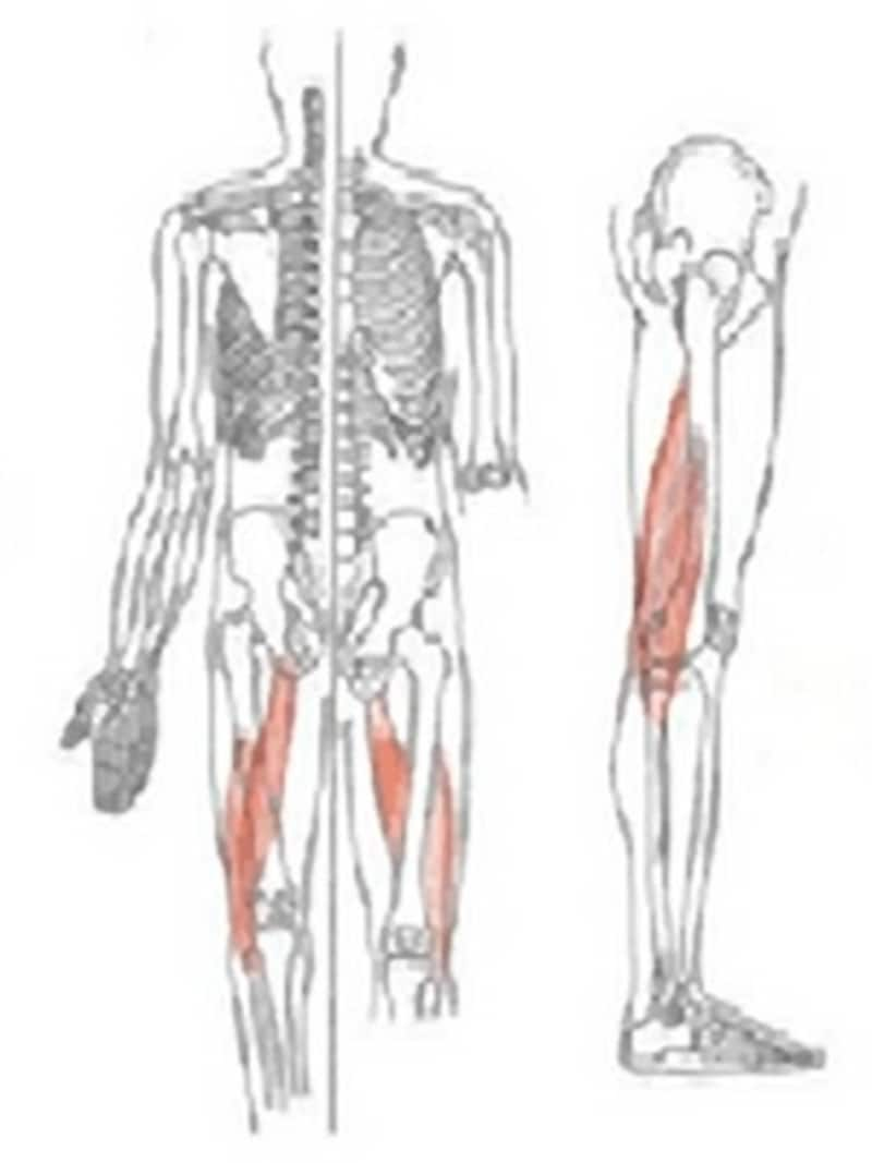 蹴る動作は股関節を後ろに伸ばす伸展の動作で腿裏の筋肉(ハムストリングス)やお尻の筋肉(大臀筋)を使います。