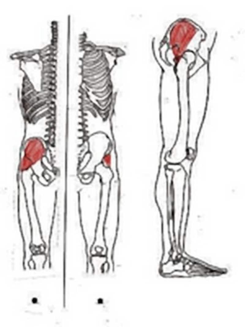 中殿筋はお尻の外側にある筋肉