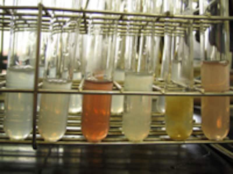 研究室の試験管