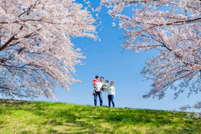 桜!花見!楽しい行事ですよね。