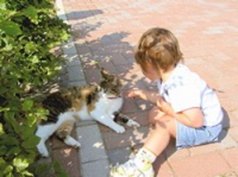ネコと遊ぶ