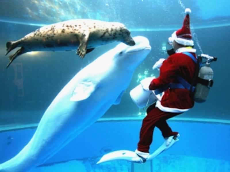水中にサンタが登場する「クリスマスファンタジータイム」