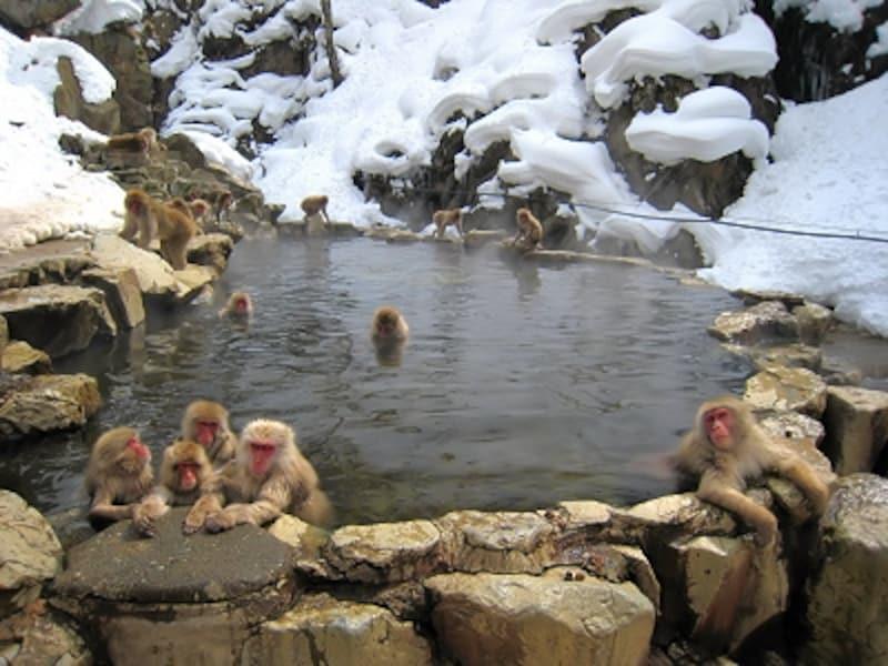 平和な気持ちになる猿の入浴「野猿公苑」