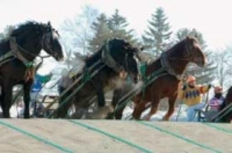 人と馬が織りなす大迫力レースを体感してみて!