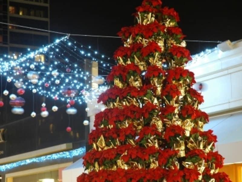 ポインセチアのクリスマスツリーとイルミネーション