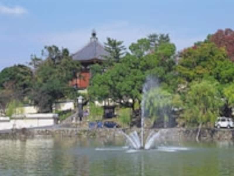 猿沢池からの興福寺。写真:奈良市観光協会