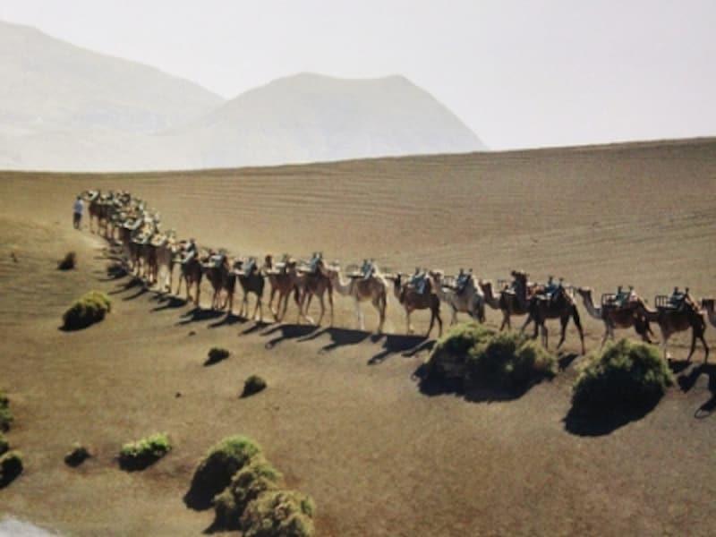 ラクダに乗って散策なんて、まるでスペインじゃないみたい