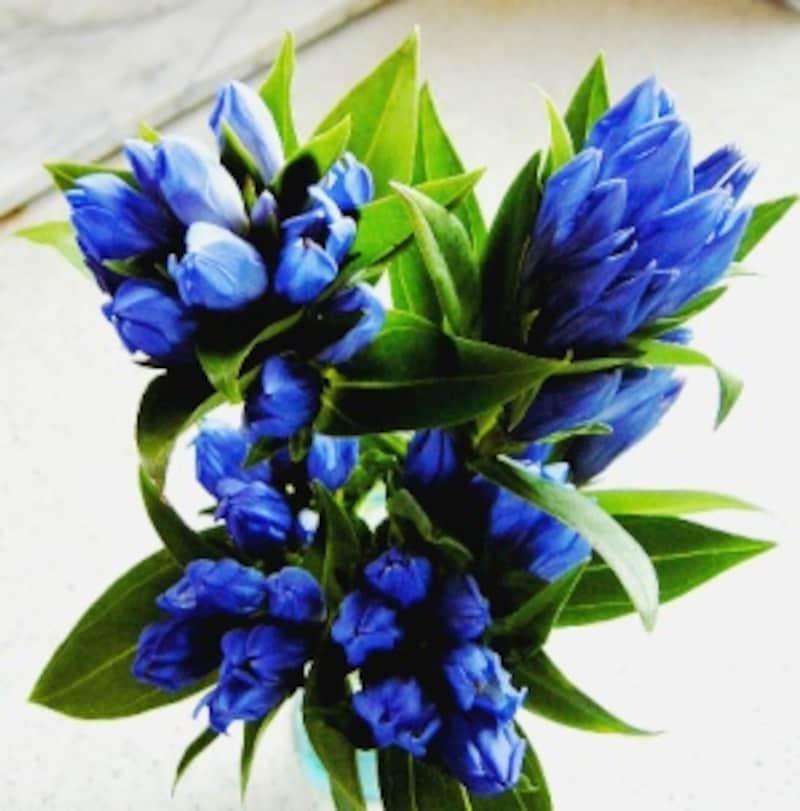 深いブルーが素敵なリンドウ