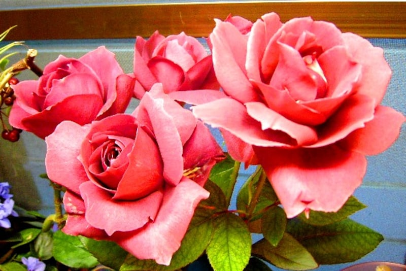 華麗なバラ