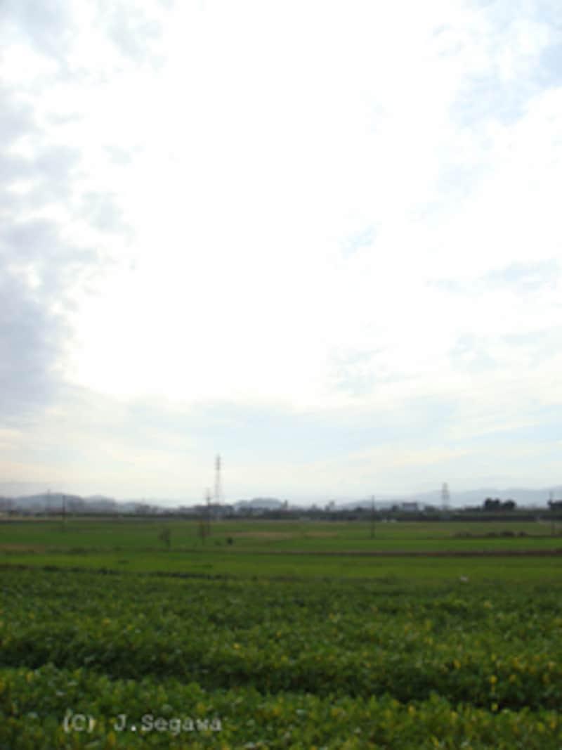 緑と空-1