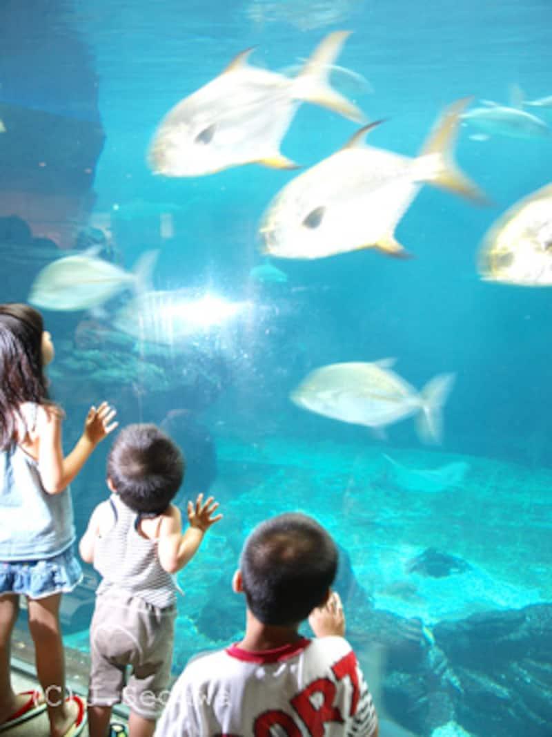 水族館での写真撮影方法